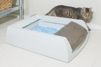 litiere chat qui se nettoie seul